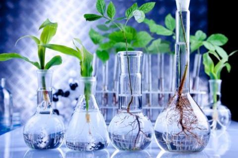 Setor de biotecnologia brasileiro atrai olhares de investidores